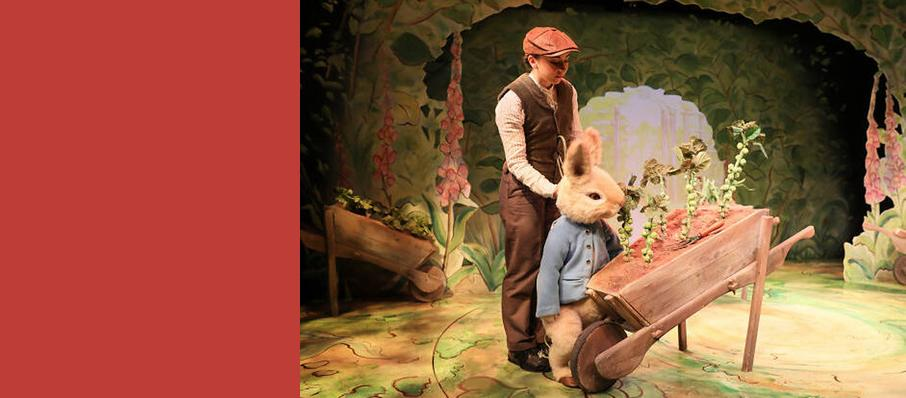 Where is Peter Rabbit, Theatre Royal Haymarket, Manchester